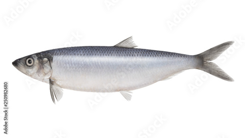 Poster Fish Fish herring isolated on white background