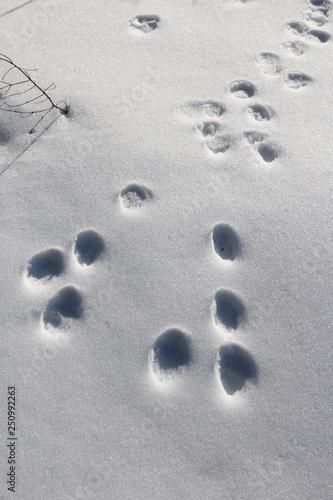 Fotografia, Obraz  Traces de lièvre dans la neige