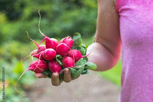 Photo  Farmer holding a freshly harvested radish in her organic garden