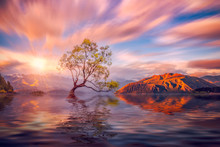 Wanaka Tree At Sunset, Wanaka, New Zealand