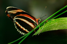 Butterfly On A Plant, Canada