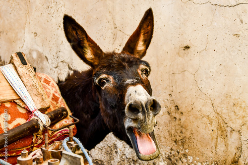 donkey in front of wall, photo as background Wallpaper Mural