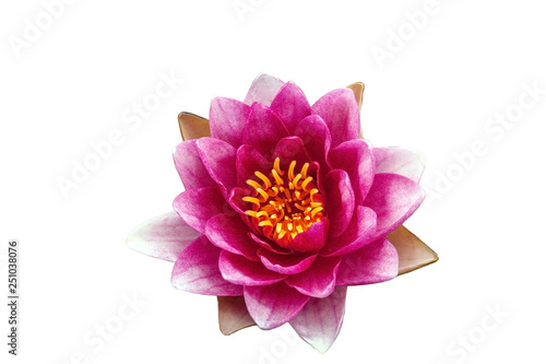 Poster de jardin Nénuphars Pink Water lily isolated on white background