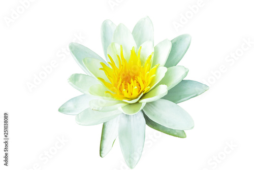Poster de jardin Nénuphars White Water lily isolated on white background