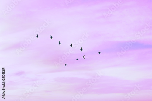 Recess Fitting Bird Migratory birds flying in the shape of v on the cloudy sunset sky. Sky and clouds with effect of pastel colored.
