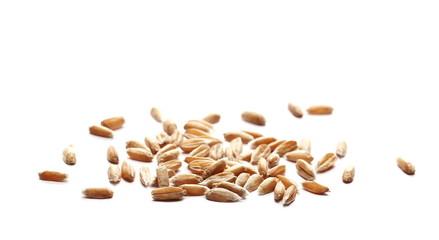 Wheat spelt grain heap isolated on white background