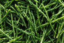 Fresh Green Samphire. Close Up...