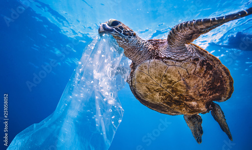Poster Tortue Plastic in Sea Water, turtle eating bag thinking that is a jellyfish, environmental pollution problem