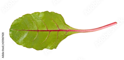 Fresh young chard green leaf isolated on white background #251067428
