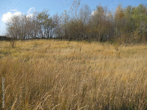 otono ruso un dia maravilloso con arboles hierba amarillo y cielo azul