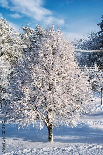 Biddeford Maine Winter Wonderland Buy This Stock Photo And Explore Similar Images At Adobe Stock Adobe Stock