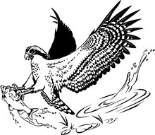 Osprey With Fish Vector Illustration