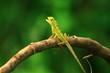 green lizard on a tree