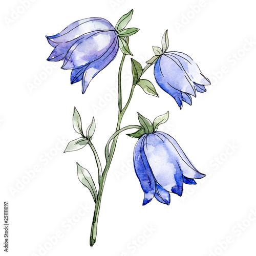 Blue campanula floral botanical flower Canvas Print