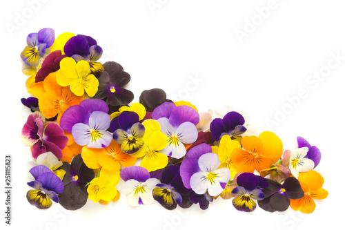 Türaufkleber Stiefmutterchen violas