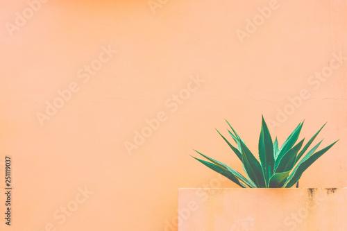 Foto auf AluDibond Kakteen Agave and orange background.