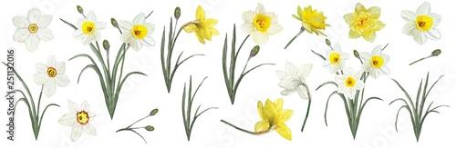 Fényképezés The flowers are daffodils