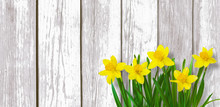 Spring Rustic Background With Yellow Daffodils Flowers