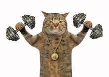 The Cat Bodybuilder With A Sports Medal Is Doing Exercises With Dumbbell Weights. White Background.