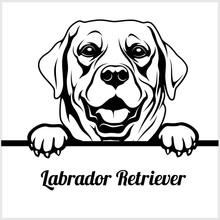 Labrador Retriever - Peeking Dogs - - Breed Face Head Isolated On White