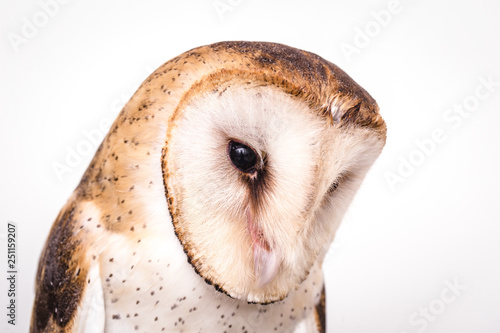 Fotobehang Uil Owl face in high resolution, owl isolated.