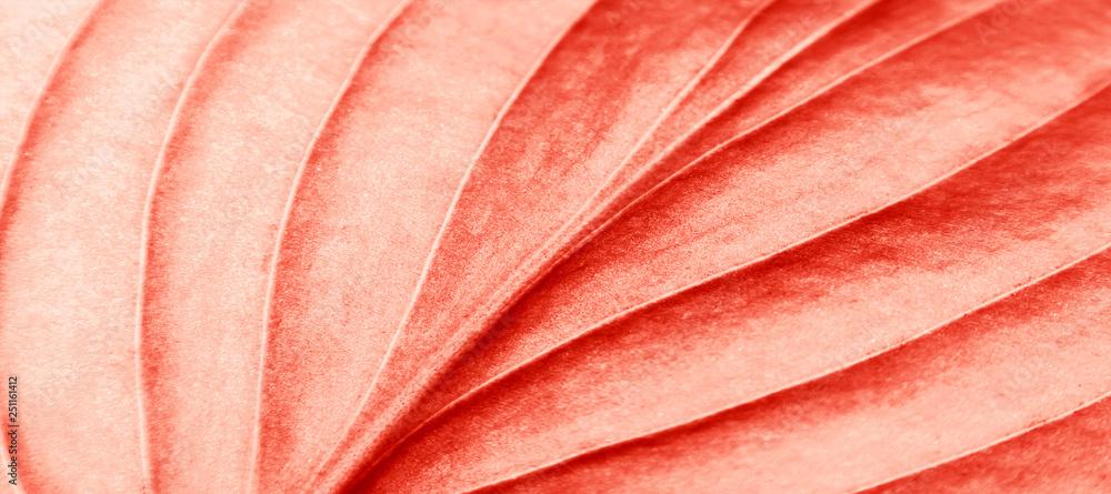Fototapety, obrazy: coral
