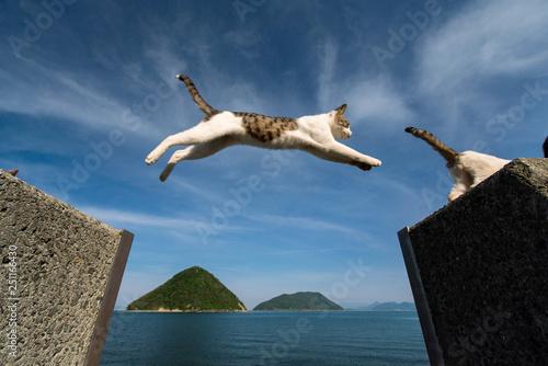 Fotografie, Obraz  猫ジャンプ