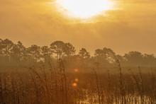 Sunrise Over St Mark's Wildlife Refuge