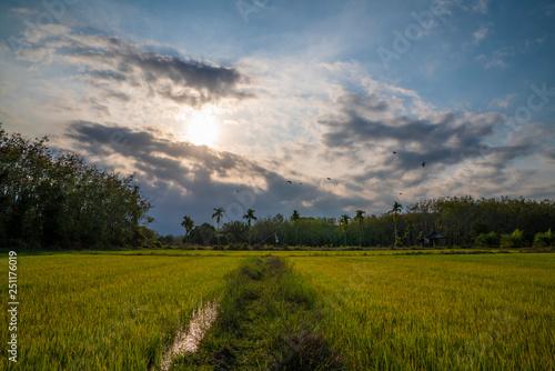 Spoed Foto op Canvas Blauwe hemel Foot path across rice field with dramatic sunset sky Thai rural landscape