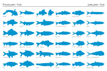 Set Of Vector Silhouette Fish....