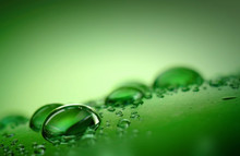 Macro Water Droplets On A Green.