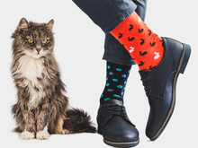 Cute Kitten, Office Manager, Stylish Shoes, Blue Pants And Bright, Colorful Socks On A White, Isolated Background. Close-up. Lifestyle, Fashion, Elegance