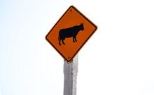 Cow Crossing Traffic Sign Symb...