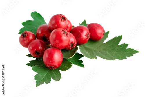 Photo hawthorn haws or berries with leaves isolated on white