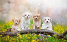Four Puppies Stand On A Broken Branch Among Dandelions, Flowers And Grass