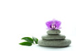 Concept of wellness and tranquility - purple orchid blossom on top of three grey roundstones and green leaves isolated on white background