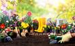 Leinwandbild Motiv Gardening - Equipment For Gardener And Flower Pots In Sunny Garden