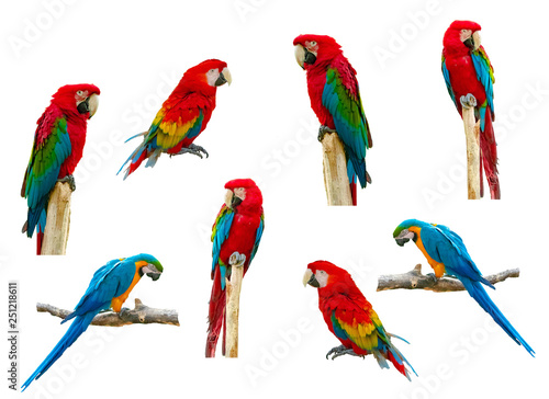 Tuinposter Papegaai Macaw parrot isolated on white background