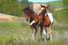Sassy Foals