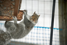 Acrobatic Squirrel Finds The B...