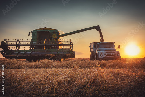 Combine harvester machine working in a wheat field at sunset Obraz na płótnie