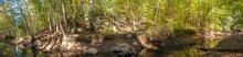 Stream In Mistletoe State Park, Georgia