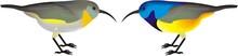 Variable Sunbirds (Cinnyris Venustus)