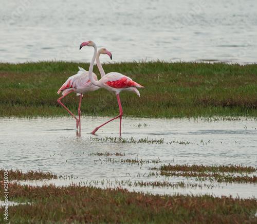 Foto op Aluminium Flamingo greater and lesser flamingos in walvis bay