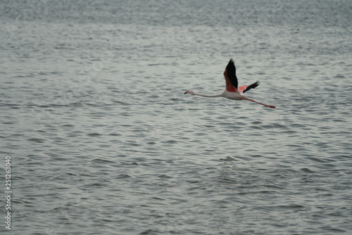 Photo  greater and lesser flamingos in walvis bay