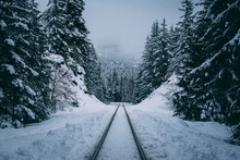 Train Tracks Into Forest Through Cold Winter Snow