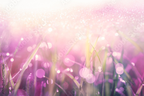 Poster Printemps beautiful grass with raindrops in pink and purple soft tone with glitter and sunlight background