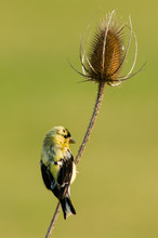Teasle And Finch - Immature Am...