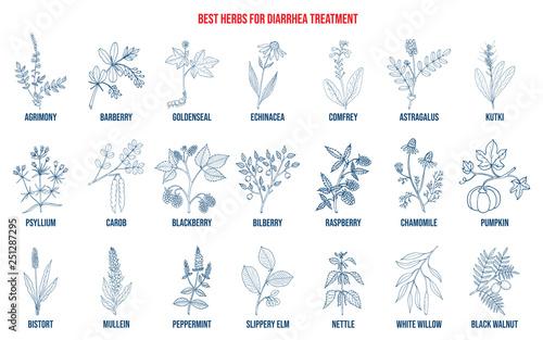 Best medicinal herbs to treat diarrhea Canvas Print