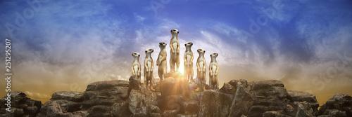 Obraz na plátně  meerkat at sunset. 3d rendering